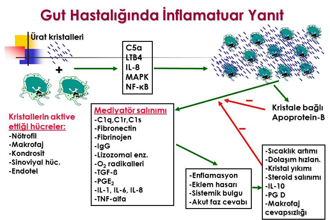 + C5aLTB4IL-8MAPK NF-κB Ürat kristalleri Kristallerin aktive ettiği hücreler: -Nötrofil-Makrofaj-Kondrosit -Sinoviyal hüc.