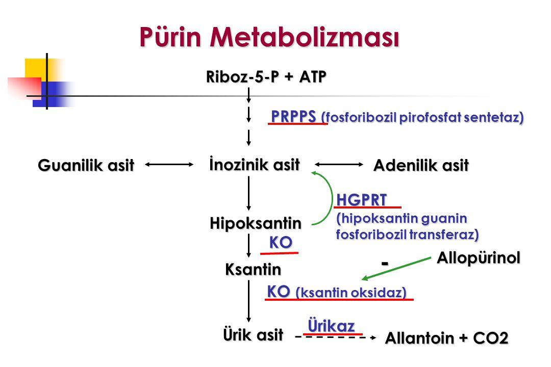 Riboz-5-P + ATP PRPPS (fosforibozil pirofosfat sentetaz) İnozinik asit Guanilik asit Adenilik asit Hipoksantin Ksantin Ürik asit HGPRT (hipoksantin guanin fosforibozil transferaz) KO (ksantin oksidaz) KO Pürin Metabolizması Allantoin + CO2 Ürikaz - Allopürinol