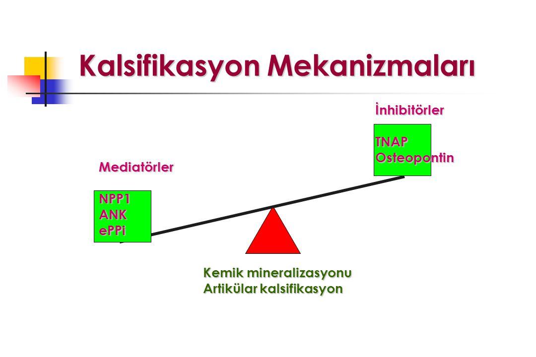 Kalsifikasyon Mekanizmaları Kalsifikasyon Mekanizmaları İnhibitörler TNAPOsteopontin Kemik mineralizasyonu Artikülar kalsifikasyon Mediatörler NPP1ANKePPi