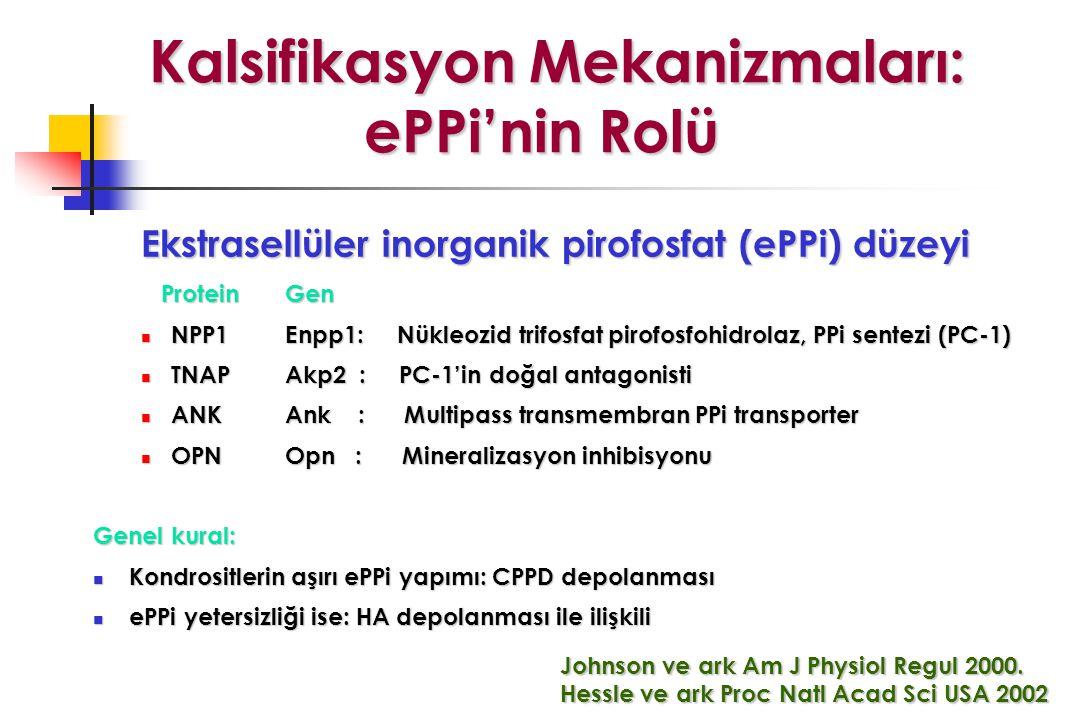 Kalsifikasyon Mekanizmaları: ePPi'nin Rolü Kalsifikasyon Mekanizmaları: ePPi'nin Rolü Ekstrasellüler inorganik pirofosfat (ePPi) düzeyi ProteinGen ProteinGen NPP1Enpp1: Nükleozid trifosfat pirofosfohidrolaz, PPi sentezi (PC-1) NPP1Enpp1: Nükleozid trifosfat pirofosfohidrolaz, PPi sentezi (PC-1) TNAPAkp2 : PC-1'in doğal antagonisti TNAPAkp2 : PC-1'in doğal antagonisti ANKAnk : Multipass transmembran PPi transporter ANKAnk : Multipass transmembran PPi transporter OPNOpn : Mineralizasyon inhibisyonu OPNOpn : Mineralizasyon inhibisyonu Genel kural: Kondrositlerin aşırı ePPi yapımı: CPPD depolanması Kondrositlerin aşırı ePPi yapımı: CPPD depolanması ePPi yetersizliği ise: HA depolanması ile ilişkili ePPi yetersizliği ise: HA depolanması ile ilişkili Johnson ve ark Am J Physiol Regul 2000.
