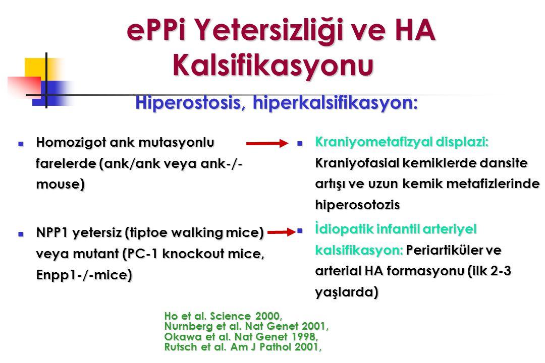 ePPi Yetersizliği ve HA Kalsifikasyonu ePPi Yetersizliği ve HA Kalsifikasyonu Homozigot ank mutasyonlu farelerde (ank/ank veya ank-/- mouse) Homozigot ank mutasyonlu farelerde (ank/ank veya ank-/- mouse) NPP1 yetersiz (tiptoe walking mice) veya mutant (PC-1 knockout mice, Enpp1-/-mice) NPP1 yetersiz (tiptoe walking mice) veya mutant (PC-1 knockout mice, Enpp1-/-mice) Ho et al.