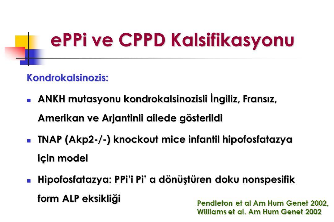 ePPi ve CPPD Kalsifikasyonu ePPi ve CPPD Kalsifikasyonu Kondrokalsinozis: ANKH mutasyonu kondrokalsinozisli İngiliz, Fransız, Amerikan ve Arjantinli ailede gösterildi ANKH mutasyonu kondrokalsinozisli İngiliz, Fransız, Amerikan ve Arjantinli ailede gösterildi TNAP (Akp2-/-) knockout mice infantil hipofosfatazya için model TNAP (Akp2-/-) knockout mice infantil hipofosfatazya için model Hipofosfatazya: PPi'i Pi' a dönüştüren doku nonspesifik form ALP eksikliği Hipofosfatazya: PPi'i Pi' a dönüştüren doku nonspesifik form ALP eksikliği Pendleton et al Am Hum Genet 2002, Williams et al.