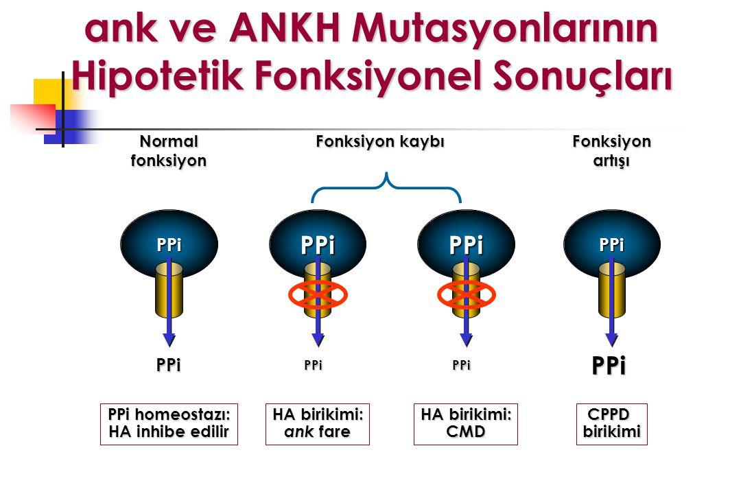 PPi PPi PPi PPi PPi PPi PPi PPiNormalfonksiyonFonksiyonartışı Fonksiyon kaybı PPi homeostazı: HA inhibe edilir HA birikimi: ank fare HA birikimi: CMD