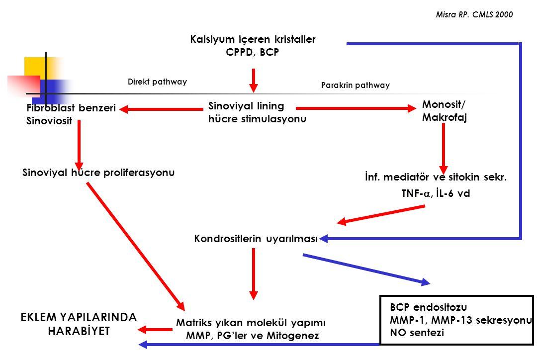 Kalsiyum içeren kristaller CPPD, BCP Sinoviyal lining hücre stimulasyonu Sinoviyal hücre proliferasyonu İnf. mediatör ve sitokin sekr. TNF- , İL-6 vd