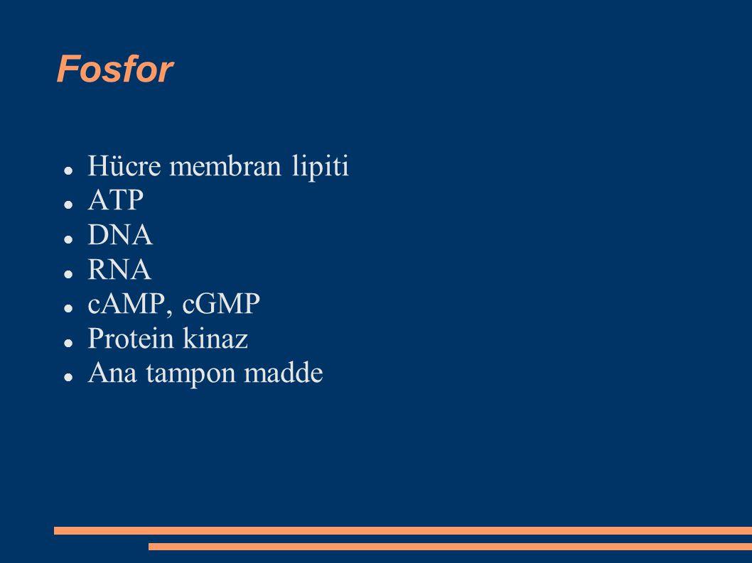 Fosfor Hücre membran lipiti ATP DNA RNA cAMP, cGMP Protein kinaz Ana tampon madde