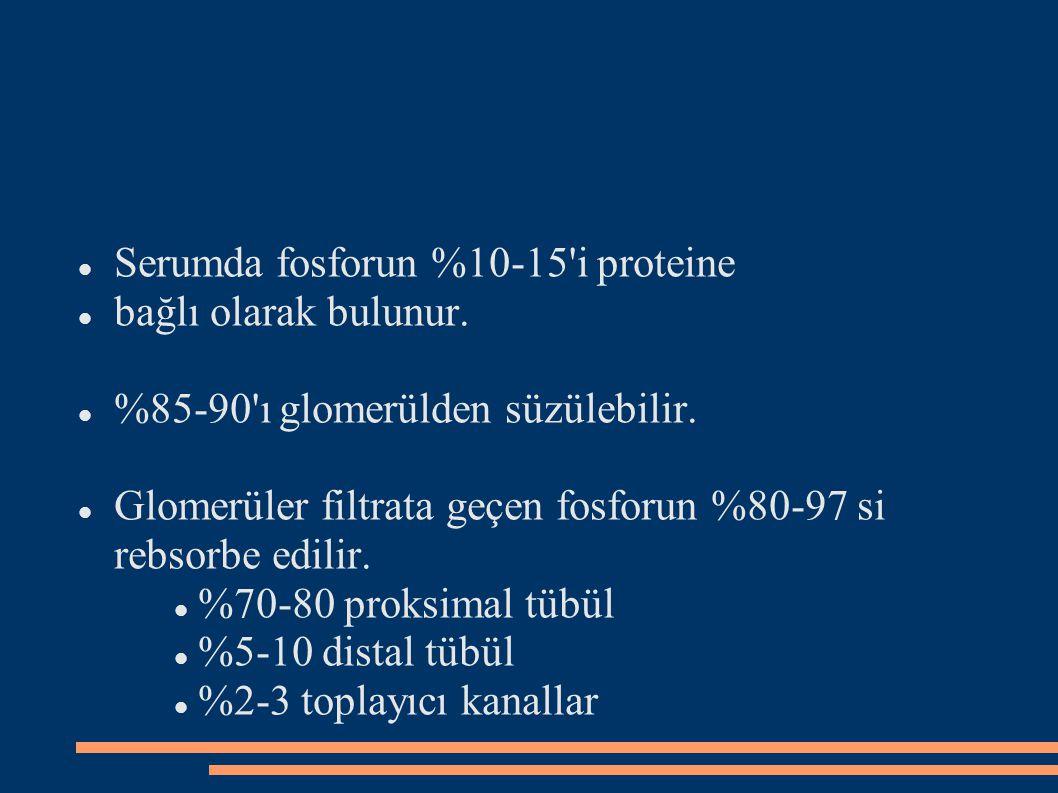 Serumda fosforun %10-15'i proteine bağlı olarak bulunur. %85-90'ı glomerülden süzülebilir. Glomerüler filtrata geçen fosforun %80-97 si rebsorbe edili