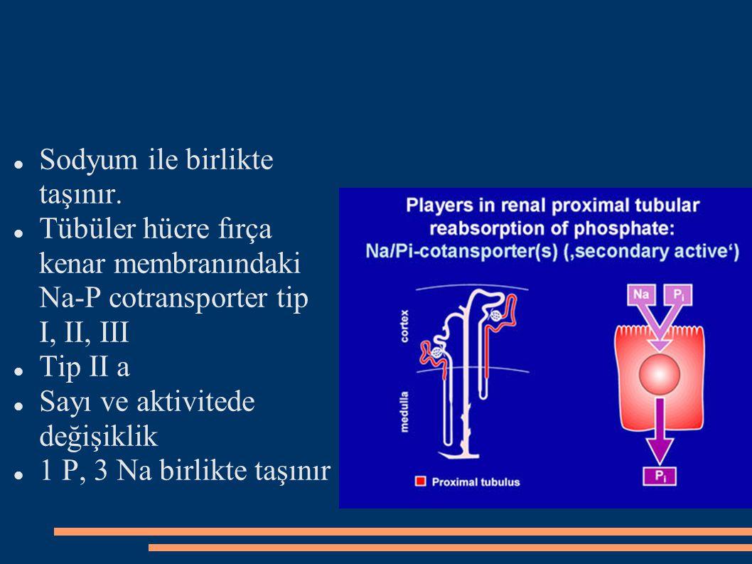 Sodyum ile birlikte taşınır. Tübüler hücre fırça kenar membranındaki Na-P cotransporter tip I, II, III Tip II a Sayı ve aktivitede değişiklik 1 P, 3 N