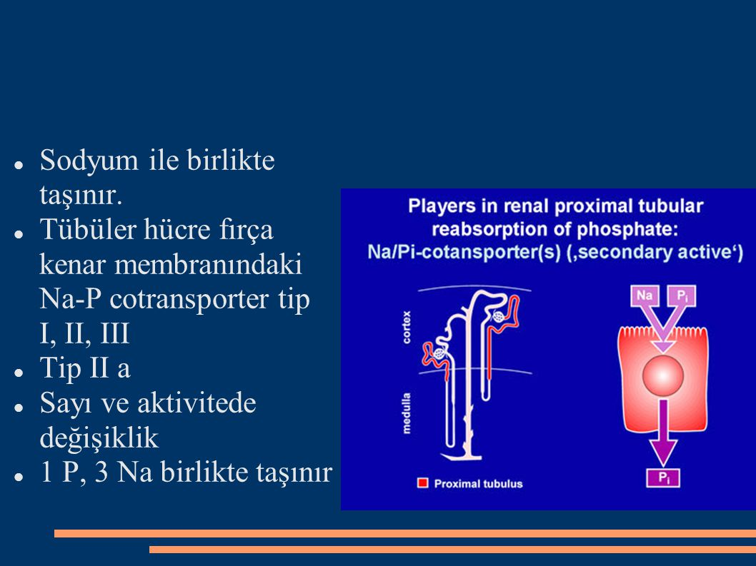 Vitamin D Hipofosfatemide renal 1,25 (OH)2D3 sentezi artar.