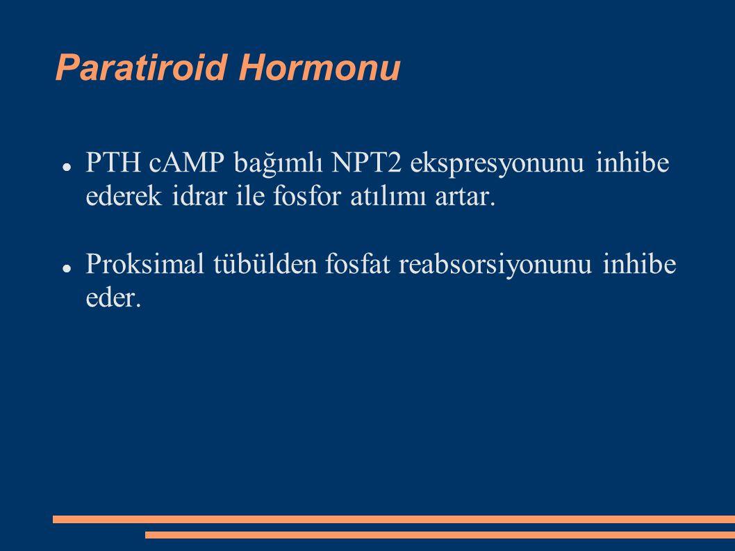 Paratiroid Hormonu PTH cAMP bağımlı NPT2 ekspresyonunu inhibe ederek idrar ile fosfor atılımı artar. Proksimal tübülden fosfat reabsorsiyonunu inhibe