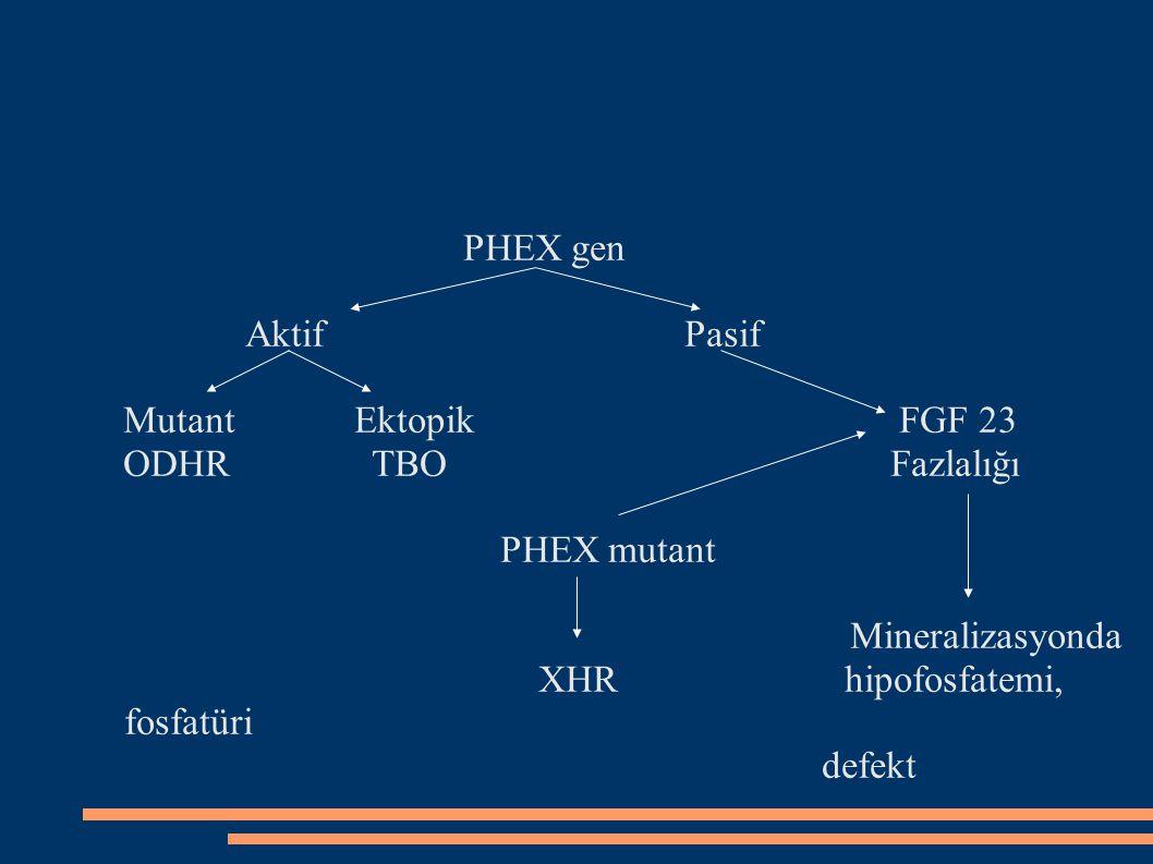 PHEX gen Aktif Pasif Mutant Ektopik FGF 23 ODHR TBO Fazlalığı PHEX mutant Mineralizasyonda XHR hipofosfatemi, fosfatüri defekt