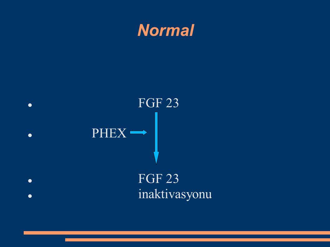 XLHR FGF 23 PHEX FGF 23 inaktivasyonu