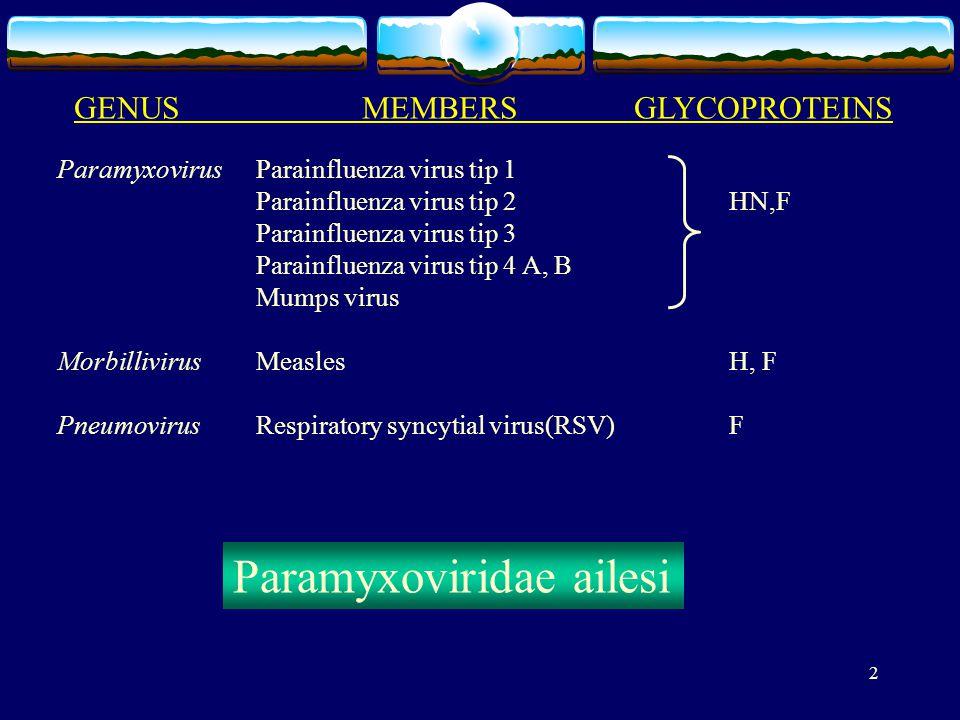 2 GENUSMEMBERS GLYCOPROTEINS Paramyxovirus Parainfluenza virus tip 1 Parainfluenza virus tip 2 HN,F Parainfluenza virus tip 3 Parainfluenza virus tip 4 A, B Mumps virus Morbillivirus MeaslesH, F Pneumovirus Respiratory syncytial virus(RSV)F Paramyxoviridae ailesi