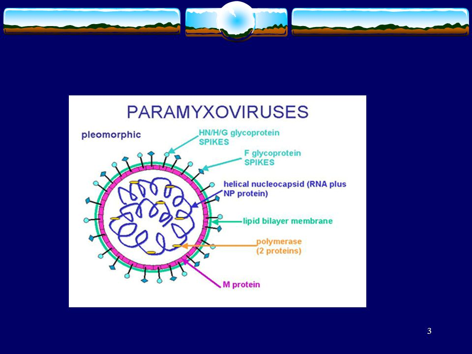 54 Structure of rubella virus