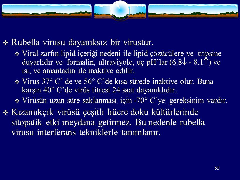 55  Rubella virusu dayanıksız bir virustur.