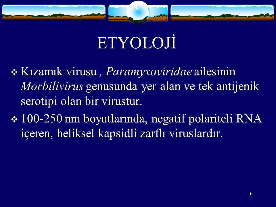 6 ETYOLOJİ  Kızamık virusu, Paramyxoviridae ailesinin Morbilivirus genusunda yer alan ve tek antijenik serotipi olan bir virustur.