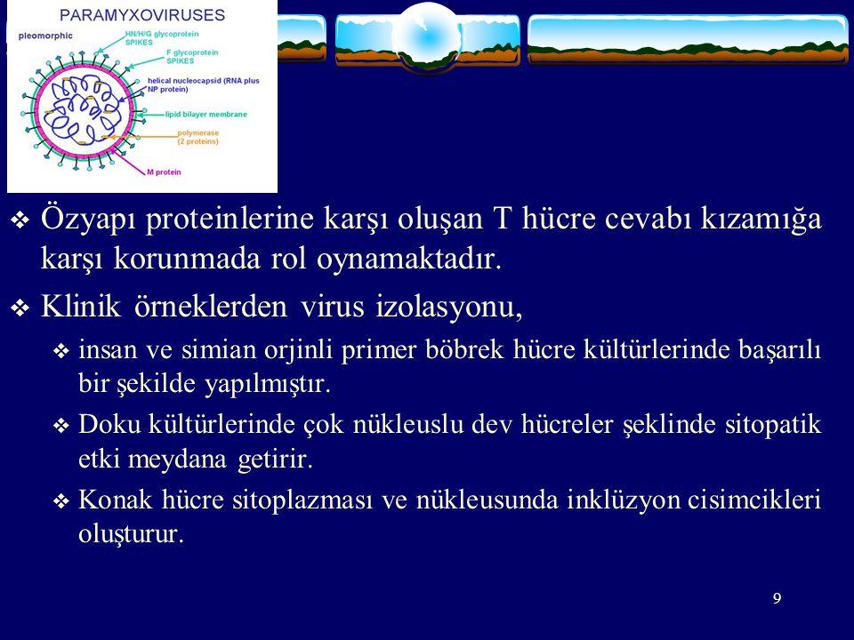 20 PATOGENEZ:  Solunum yolu ile alınan virüs solunum yolları epitel hücrelerine girer, respiratuar mukozada lokal olarak çoğalır ve bölgesel lenf nodlarına yayılır, primer viremi meydana gelir.