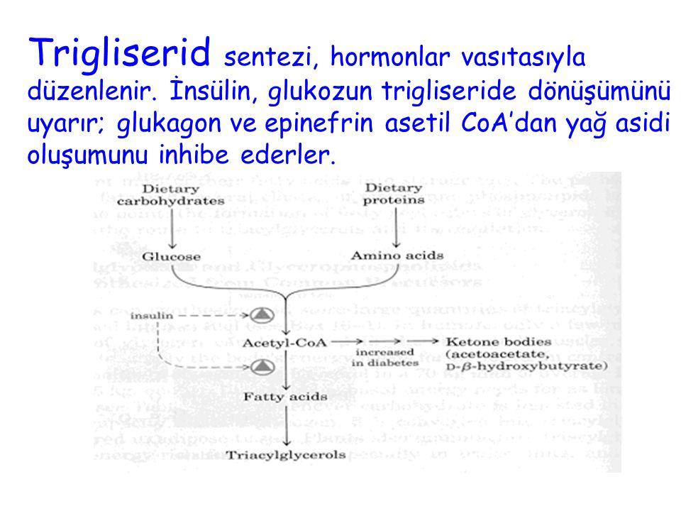 15 Trigliserid sentezi, hormonlar vasıtasıyla düzenlenir. İnsülin, glukozun trigliseride dönüşümünü uyarır; glukagon ve epinefrin asetil CoA'dan yağ a