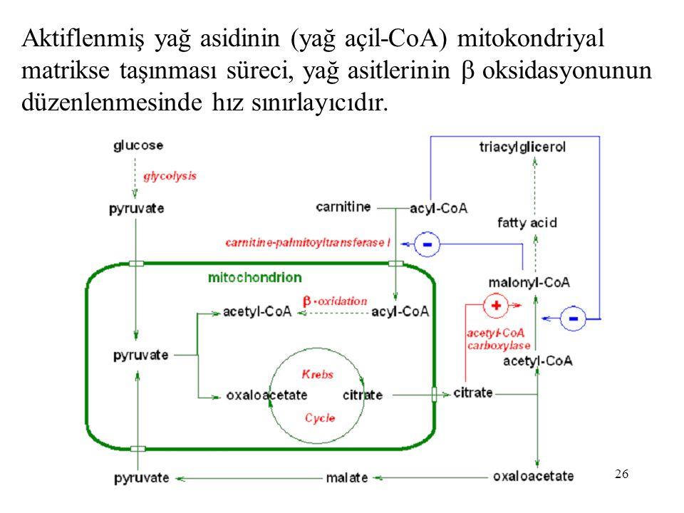 26 Aktiflenmiş yağ asidinin (yağ açil-CoA) mitokondriyal matrikse taşınması süreci, yağ asitlerinin  oksidasyonunun düzenlenmesinde hız sınırlayıcıdır.