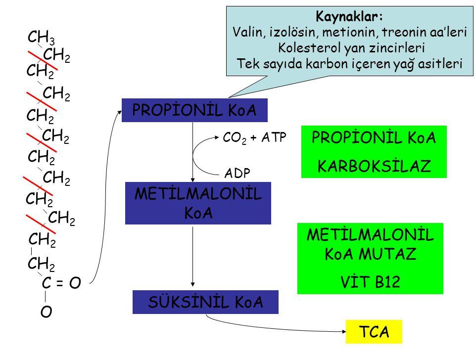 CH 3 CH 2 C = O O CH 2 PROPİONİL KoA Kaynaklar: Valin, izolösin, metionin, treonin aa'leri Kolesterol yan zincirleri Tek sayıda karbon içeren yağ asitleri CO 2 + ATP ADP METİLMALONİL KoA PROPİONİL KoA KARBOKSİLAZ METİLMALONİL KoA MUTAZ VİT B12 SÜKSİNİL KoA TCA