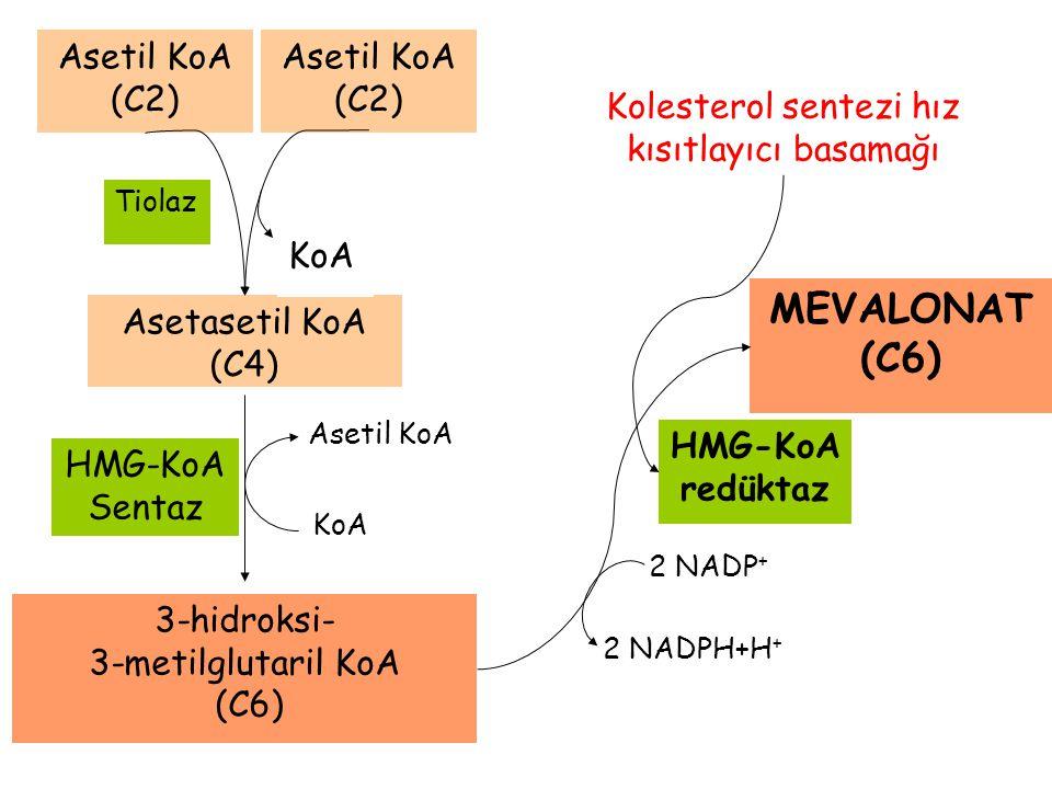 Asetil KoA Asetasetil KoA (C4) KoA Tiolaz Asetil KoA (C2) Asetil KoA (C2) KoA 3-hidroksi- 3-metilglutaril KoA (C6) HMG-KoA Sentaz HMG-KoA redüktaz MEV