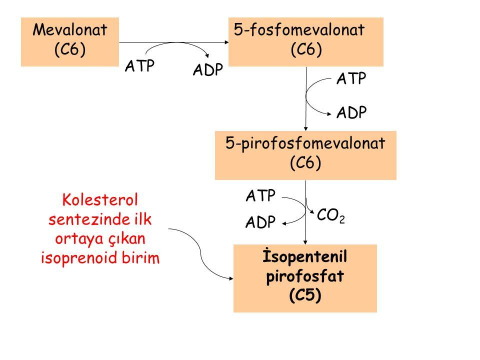 CO 2 Mevalonat (C6) ATP ADP 5-fosfomevalonat (C6) ATP ADP 5-pirofosfomevalonat (C6) ATP ADP İsopentenil pirofosfat (C5) Kolesterol sentezinde ilk orta
