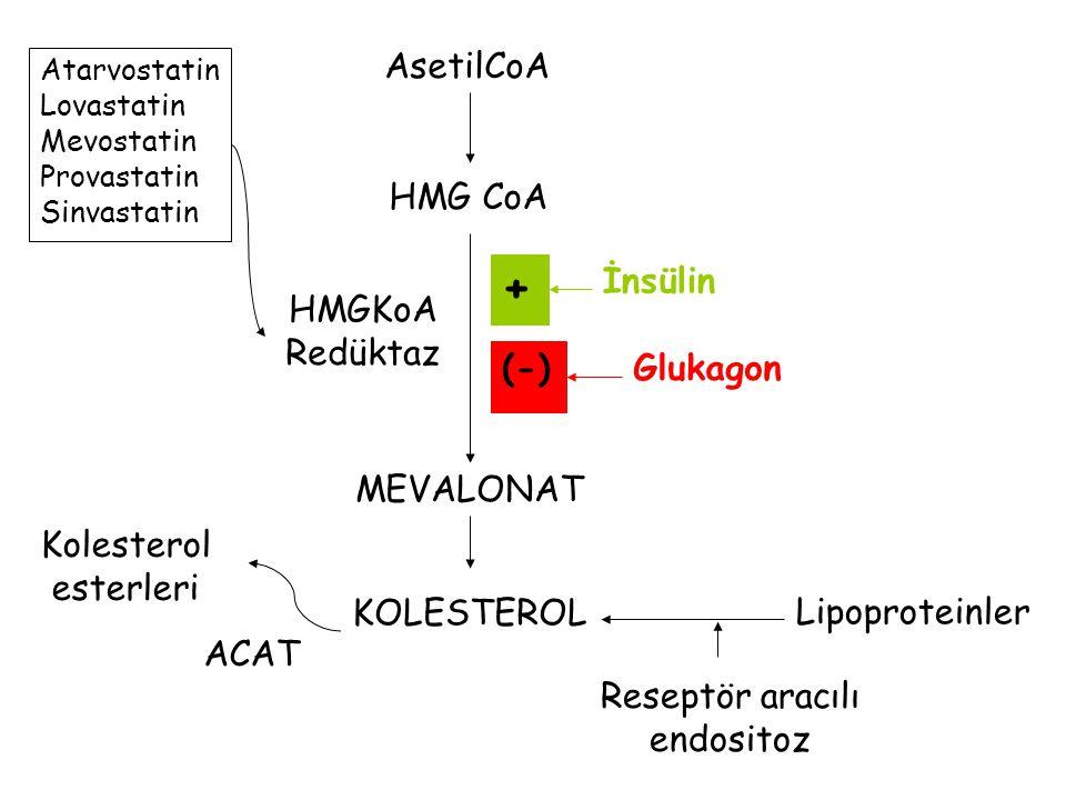 HMG CoA AsetilCoA MEVALONAT KOLESTEROL Lipoproteinler Reseptör aracılı endositoz Kolesterol esterleri ACAT HMGKoA Redüktaz Atarvostatin Lovastatin Mevostatin Provastatin Sinvastatin Glukagon (-) İnsülin +