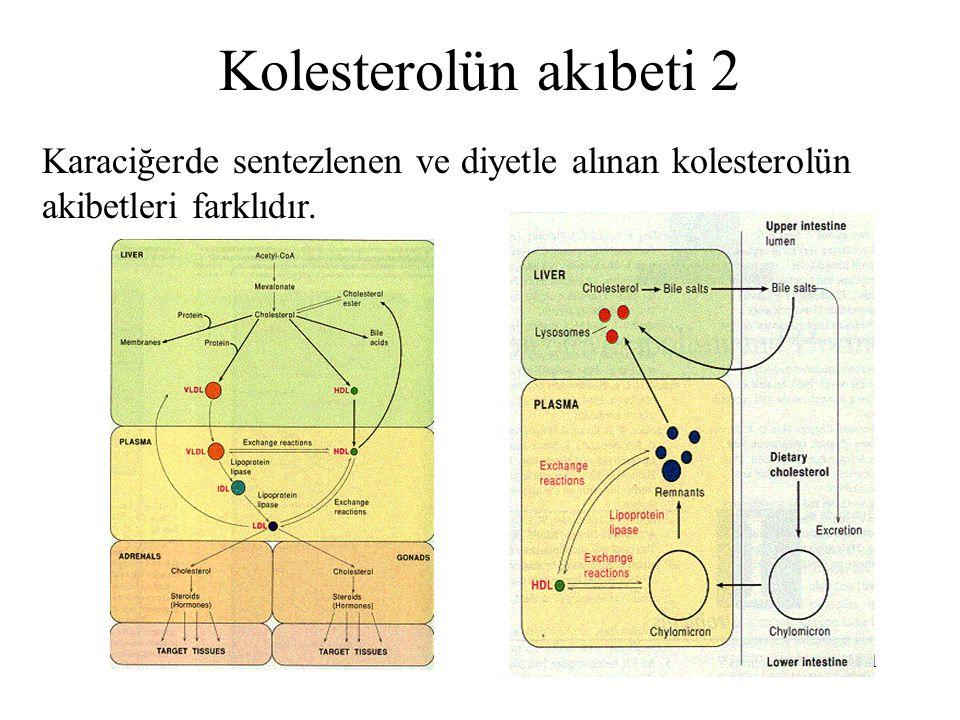 51 Kolesterolün akıbeti 2 Karaciğerde sentezlenen ve diyetle alınan kolesterolün akibetleri farklıdır.