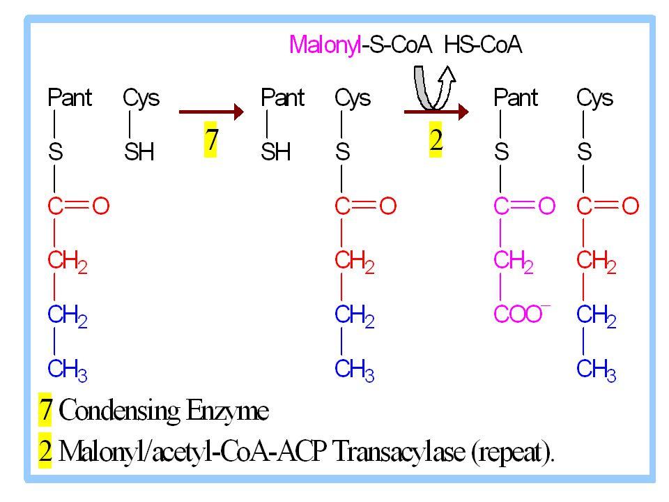 20 Yağ asitlerinin oksidasyonu Dış mitokondriyal membranda oluşan yağ açil-CoA bileşikleri, iç mitokondriyal membrandan geçemezler; bunların mitokondriyal matrikse alınmaları karnitin gerekir.
