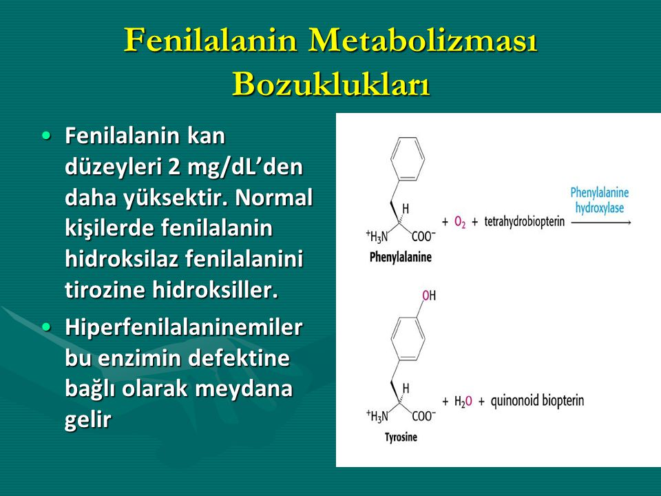 Fenilalanin Metabolizması Bozuklukları Fenilalanin kan düzeyleri 2 mg/dL'den daha yüksektir. Normal kişilerde fenilalanin hidroksilaz fenilalanini tir