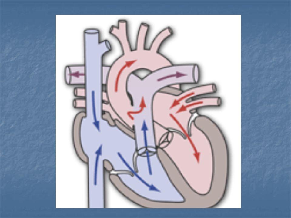Tanı: Ekokardiografi