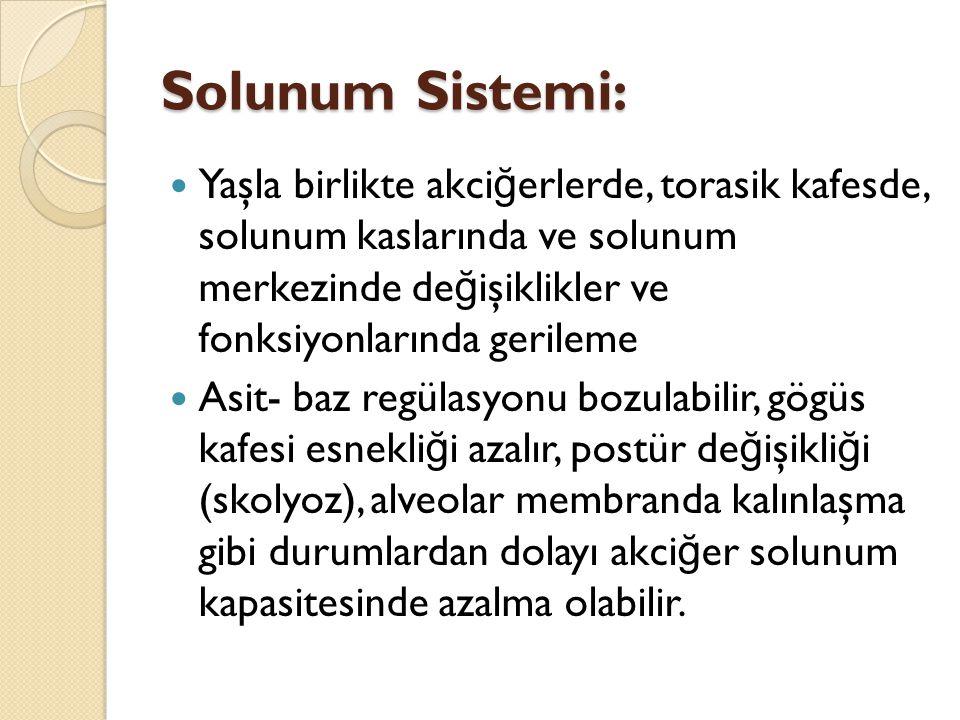 Solunum Sistemi: Yaşla birlikte akci ğ erlerde, torasik kafesde, solunum kaslarında ve solunum merkezinde de ğ işiklikler ve fonksiyonlarında gerileme