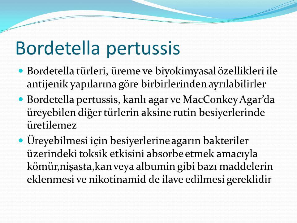 Bordetella pertussis Bordetella türleri, üreme ve biyokimyasal özellikleri ile antijenik yapılarına göre birbirlerinden ayrılabilirler Bordetella pert