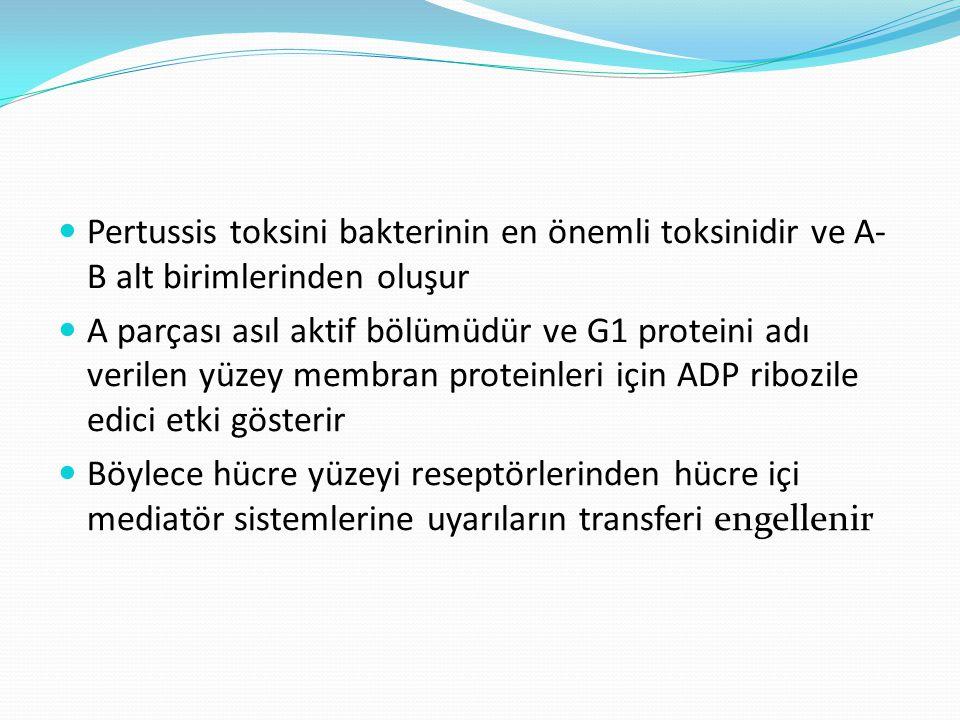 Pertussis toksini bakterinin en önemli toksinidir ve A- B alt birimlerinden oluşur A parçası asıl aktif bölümüdür ve G1 proteini adı verilen yüzey mem