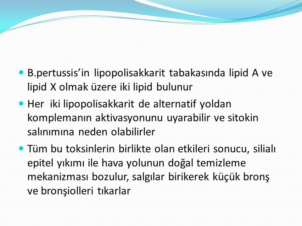 B.pertussis'in lipopolisakkarit tabakasında lipid A ve lipid X olmak üzere iki lipid bulunur Her iki lipopolisakkarit de alternatif yoldan komplemanın