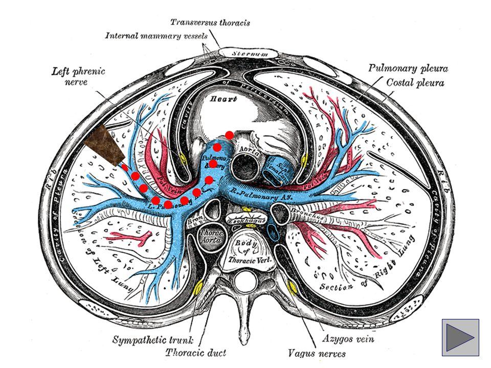 Pulmoner tromboembolisi (PTE) olan hastaların en az % 70 kadarında (çoğunlukla asemptomatik olan) alt ekstremite derin ven trombozları saptanabilmektedir...