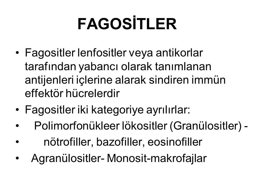 FAGOSİTLER Fagositler lenfositler veya antikorlar tarafından yabancı olarak tanımlanan antijenleri içlerine alarak sindiren immün effektör hücrelerdir Fagositler iki kategoriye ayrılırlar: Polimorfonükleer lökositler (Granülositler) - nötrofiller, bazofiller, eosinofiller Agranülositler- Monosit-makrofajlar