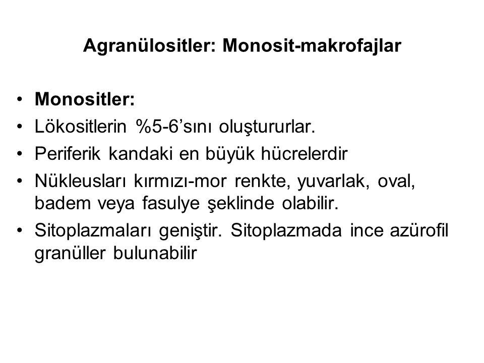 Agranülositler: Monosit-makrofajlar Monositler: Lökositlerin %5-6'sını oluştururlar.