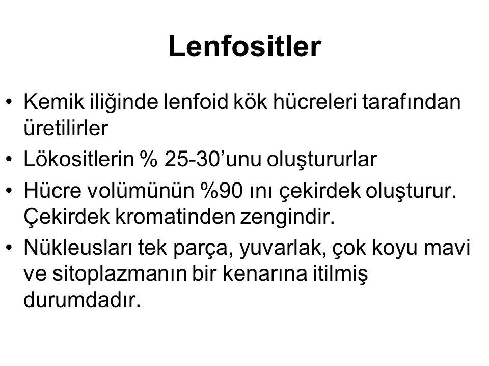 Lenfositler Kemik iliğinde lenfoid kök hücreleri tarafından üretilirler Lökositlerin % 25-30'unu oluştururlar Hücre volümünün %90 ını çekirdek oluşturur.
