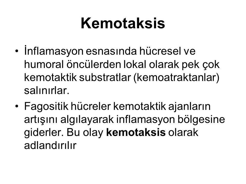 Kemotaksis İnflamasyon esnasında hücresel ve humoral öncülerden lokal olarak pek çok kemotaktik substratlar (kemoatraktanlar) salınırlar.