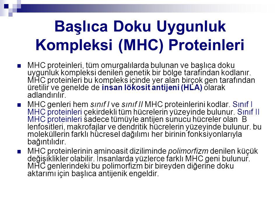 Başlıca Doku Uygunluk Kompleksi (MHC) Proteinleri MHC proteinleri, tüm omurgalılarda bulunan ve başlıca doku uygunluk kompleksi denilen genetik bir bö