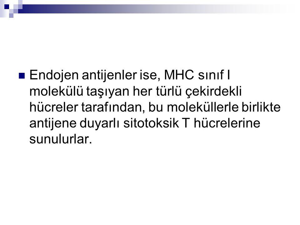 Endojen antijenler ise, MHC sınıf I molekülü taşıyan her türlü çekirdekli hücreler tarafından, bu moleküllerle birlikte antijene duyarlı sitotoksik T