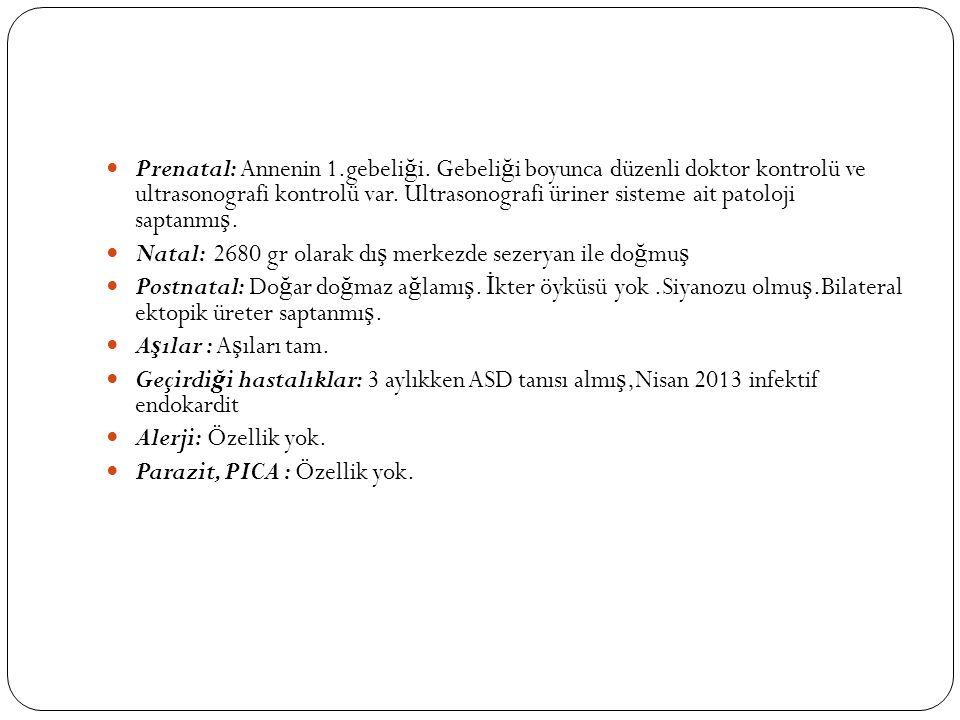 Renal tubuler epitel
