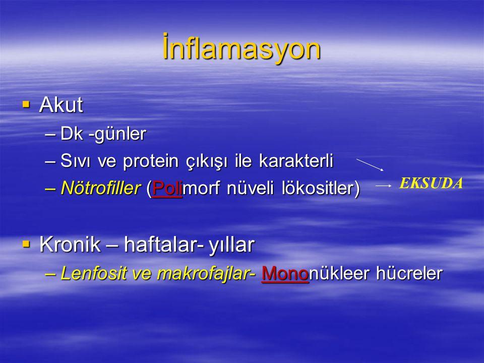  Akut –Dk -günler –Sıvı ve protein çıkışı ile karakterli –Nötrofiller (Polimorf nüveli lökositler)  Kronik – haftalar- yıllar –Lenfosit ve makrofajl