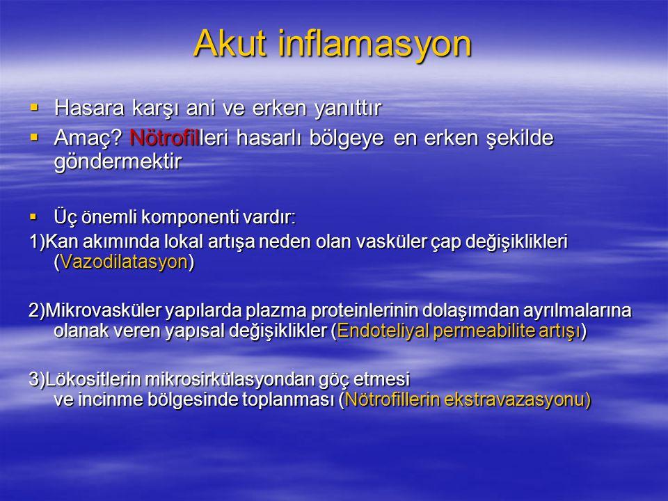 Akut inflamasyon  Hasara karşı ani ve erken yanıttır  Amaç? Nötrofilleri hasarlı bölgeye en erken şekilde göndermektir  Üç önemli komponenti vardır