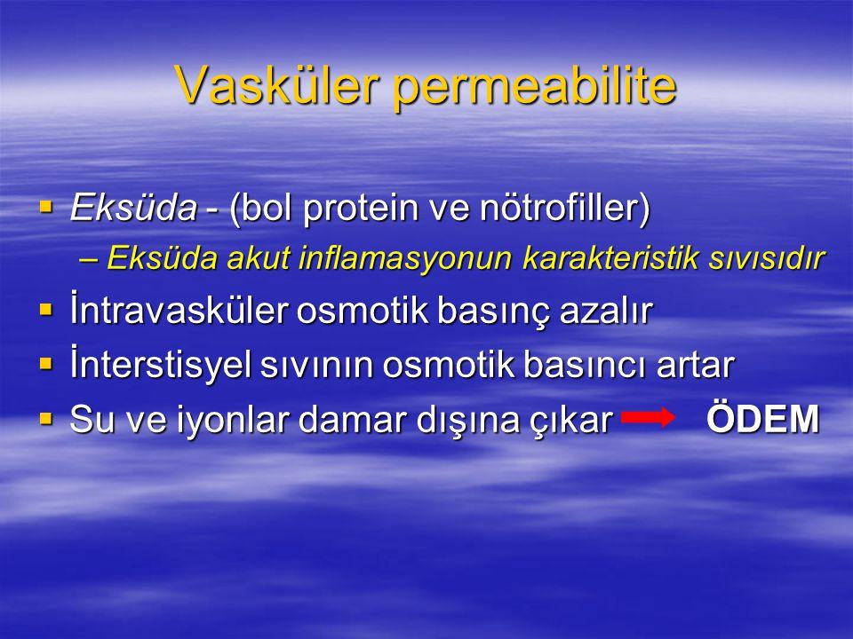 Vasküler permeabilite  Eksüda - (bol protein ve nötrofiller) –Eksüda akut inflamasyonun karakteristik sıvısıdır  İntravasküler osmotik basınç azalır