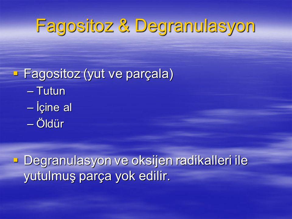 Fagositoz & Degranulasyon  Fagositoz (yut ve parçala) –Tutun –İçine al –Öldür  Degranulasyon ve oksijen radikalleri ile yutulmuş parça yok edilir.