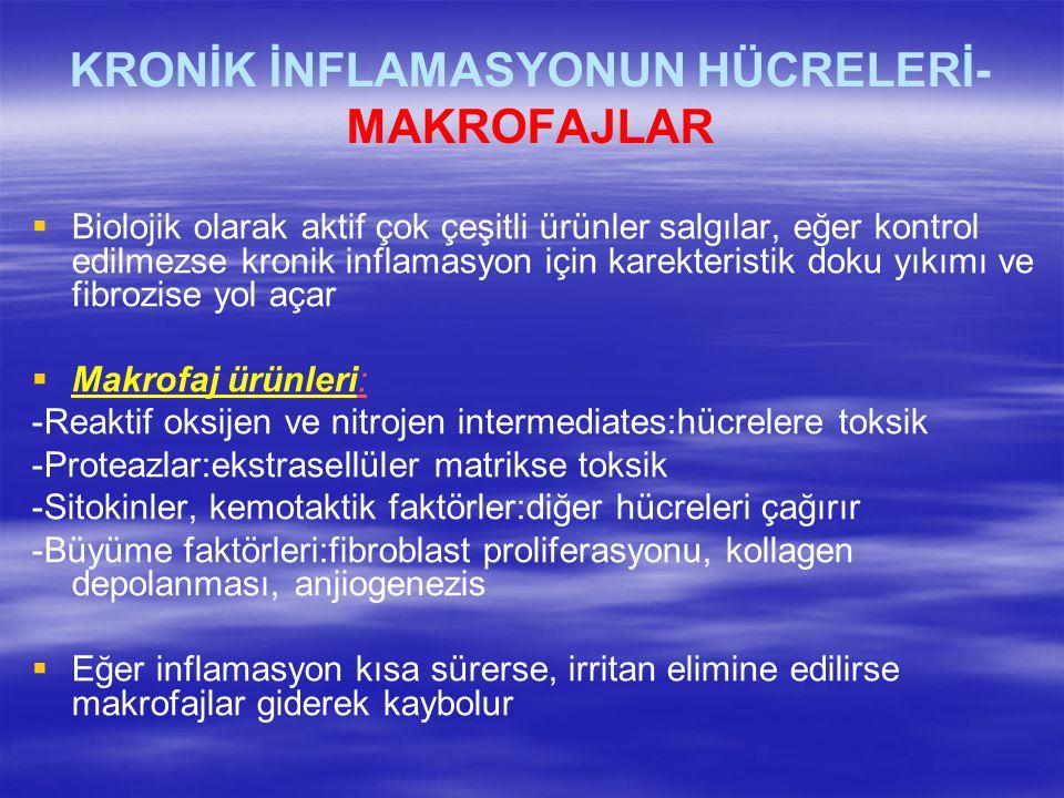 KRONİK İNFLAMASYONUN HÜCRELERİ- MAKROFAJLAR   Biolojik olarak aktif çok çeşitli ürünler salgılar, eğer kontrol edilmezse kronik inflamasyon için kar