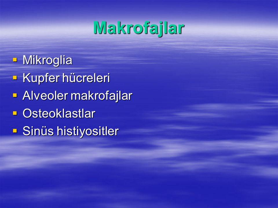 Makrofajlar  Mikroglia  Kupfer hücreleri  Alveoler makrofajlar  Osteoklastlar  Sinüs histiyositler