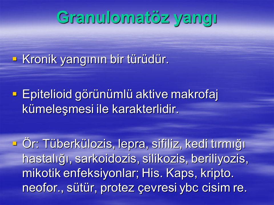 Granulomatöz yangı  Kronik yangının bir türüdür.  Epitelioid görünümlü aktive makrofaj kümeleşmesi ile karakterlidir.  Ör: Tüberkülozis, lepra, sif