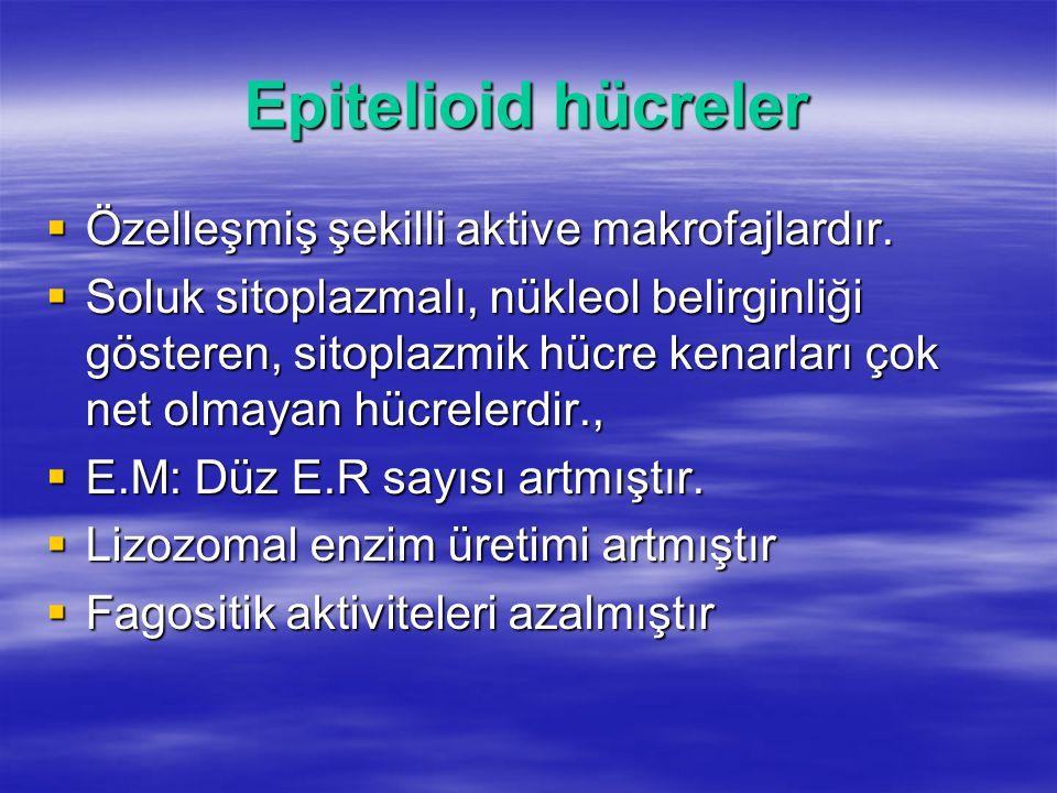 Epitelioid hücreler  Özelleşmiş şekilli aktive makrofajlardır.  Soluk sitoplazmalı, nükleol belirginliği gösteren, sitoplazmik hücre kenarları çok n